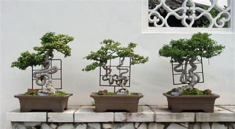 bonsai selber ziehen bonsai selber ziehen bonsai selber ziehen mein sch ner