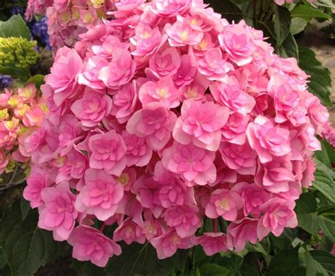 mostre di fiori fiori in mostra giugno 2017 colori e profumi d estate