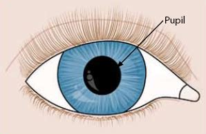 structures and functions of the eye: pupil, lens & retina