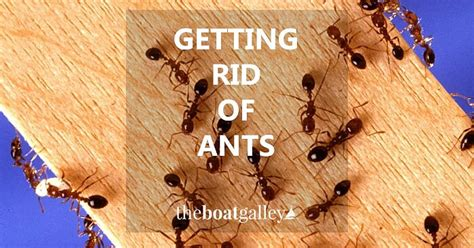 how to get rid of a boat how to get rid of ants the boat galley