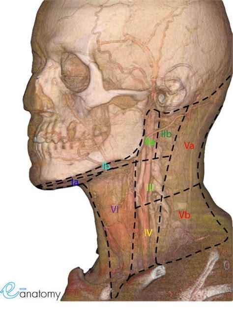 caracterizacion de cadenas ganglionares cervicales el cancer y el manejo del cuello