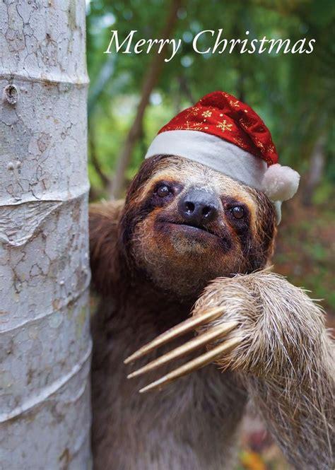 details  christmas cards packs santa sloth exclusive  red frog designs freepost