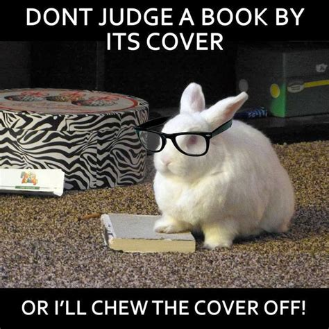 Bunny Meme - 63 best images about bunny memes on pinterest carrots