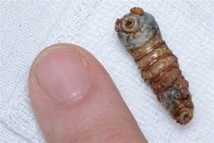 the most horrifying and awesome creepy crawlies in the