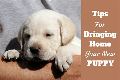 bringing home a new puppy tips for getting prepared