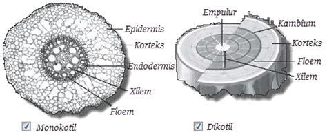 perbedaan gambar format jpeg dan png perbedaan batang tumbuhan dikotil dan monokotil