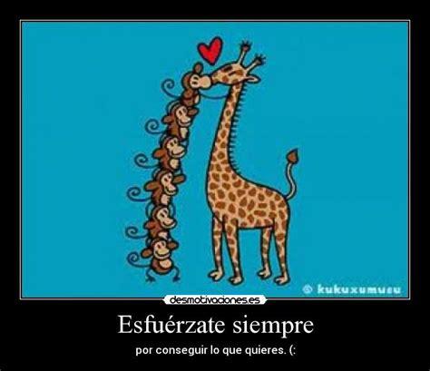 imagenes de amor jirafas im 225 genes y carteles de jirafa pag 14 desmotivaciones