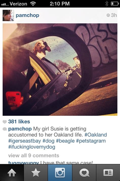 puppy captions for instagram 17 best images about iphone self portraits on avatar instagram and andy