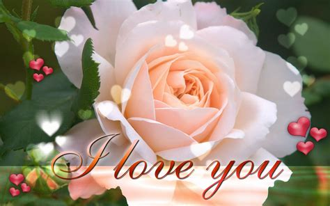 images of love and flowers flower love wallpaper