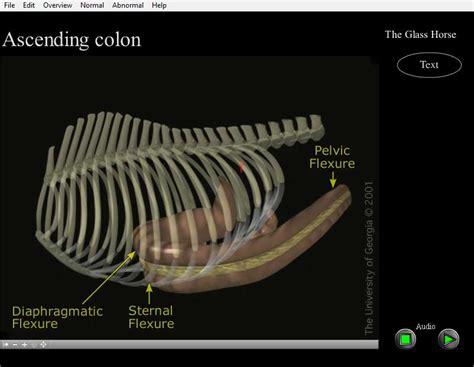 saunders veterinary anatomy coloring book 1e veterinary anatomy coloring book 2e shrek drawings