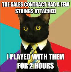 Business Cat Meme - the best of the business cat meme