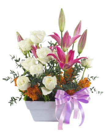 spedisci fiori faxiflora 174 catalogo fiori a domicilio