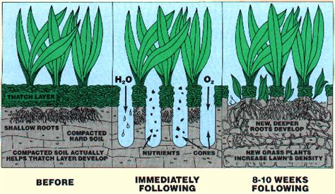 benefits of lawn aeration dos amigos landscaping and