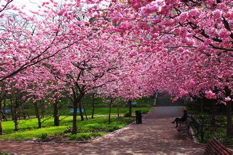 Imagenes De Sakura Japon | entremares magazine un espacio para desubicados