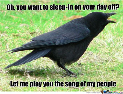 Crow Meme - damn crow by jimozoid meme center
