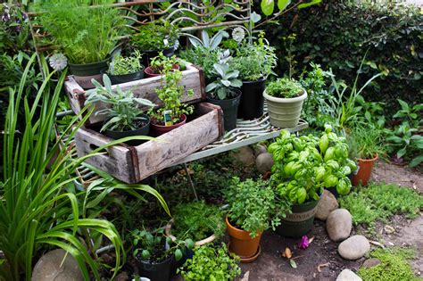 herb garden chronicallybrave a place of understanding