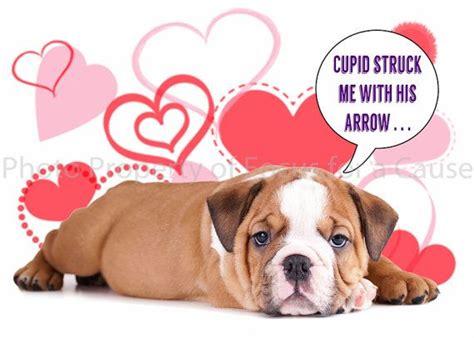 valentines day bulldog bulldog puppy s day card 2