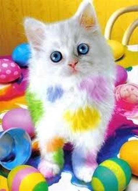 Colors Cat white kitten with blue and rainbow colored