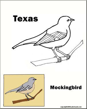 texas bird coloring page texas state bird mockingbird abcteach