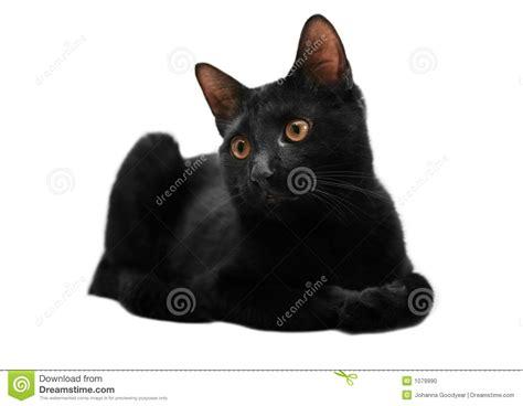 Black Cat T L Ld 86 Cm black cat stock photo image 1079990