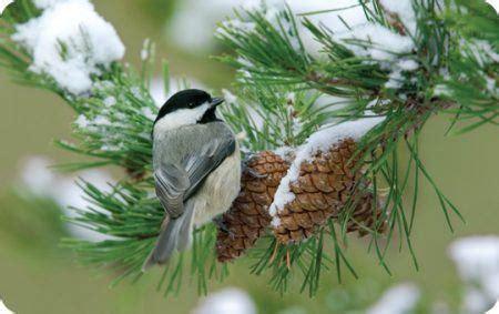 winter wild birds unlimited   wild birds unlimited