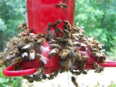 keep bees away from house 25 best ideas about hummingbird food on pinterest hummingbird feeder food