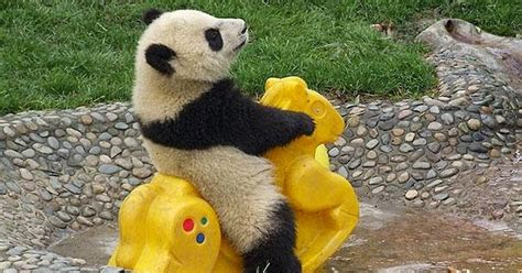 ivanildosantos gambar beruang lucu