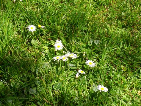 Secret Garden Flowers Free Stock Photo Public Domain Secret Garden Flowers