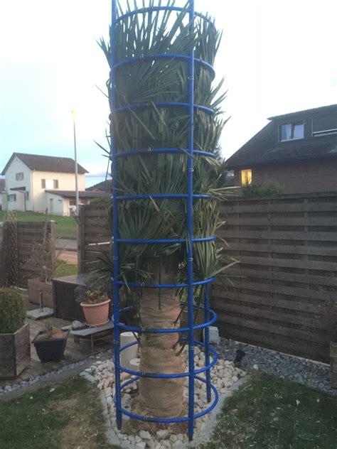 winterschutz palmen palmen winterschutz de