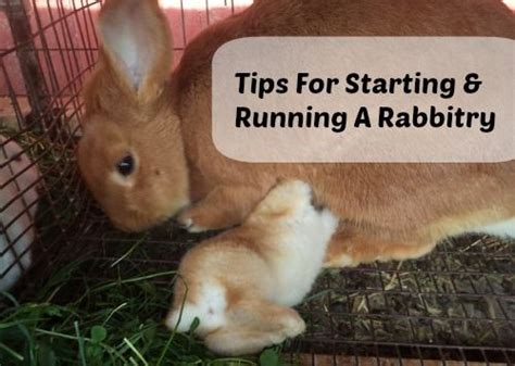 backyard rabbitry 17 best ideas about rabbit run on pinterest rabbit