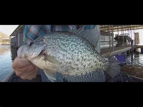 winter crappie fishing  slabs part  arkansas crappie