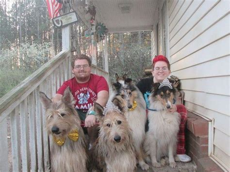 berger picard puppies for sale jem s collies berger picards puppies for sale
