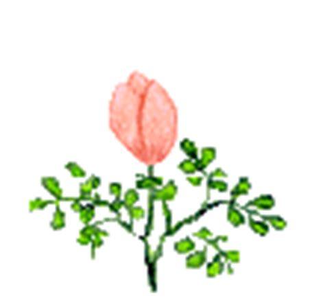 wallpaper bunga cantik gif 60 gambar animasi tumbuhan bunga cantik untuk power point