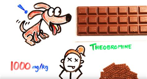 how much chocolate can a eat without dying how much coffee water and chocolate does it take to kill you