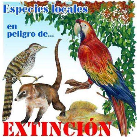 imagenes animales y plantas en peligro de extincion animales y plantas en peligro de extincion ecologos por