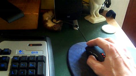desk weasel for sale ozzy the weasel attacks helpless mouse youtube