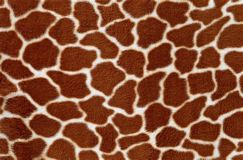 printable animal skin patterns animal fur skin background two photo texture background
