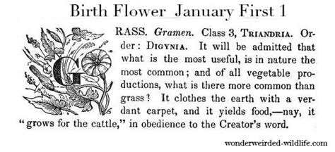 january 22 birth date meaning 17 best images about january birth flowers on pinterest