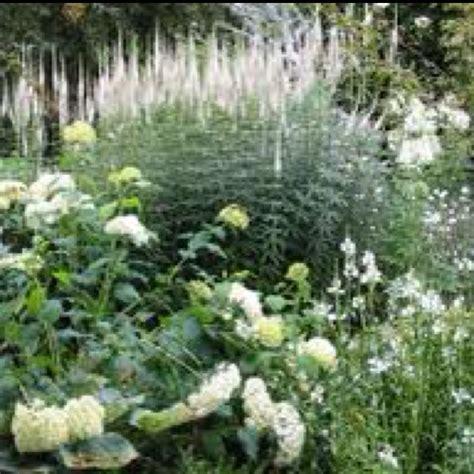 Welche Pflanzen Passen Zu Buchsbaum by Sissinghurst The White Garden Sissinghurst