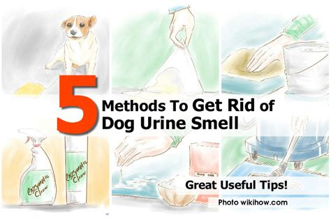 how to get rid of pee smell on bed how to get rid of dog urine smell idees and solutions
