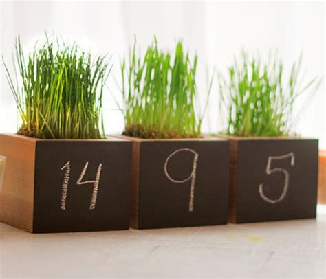 Wheatgrass Planter by 17 Best Images About Wheat Grass On Smoothie