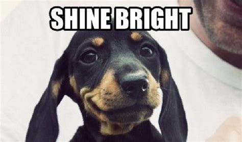 Dachshund Meme - 12 best dachshund memes of all time