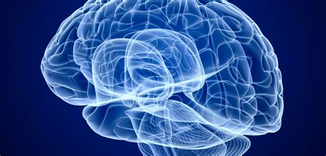 May Had A Brain by Brain Structure May Be Root Of Apathy Of Oxford