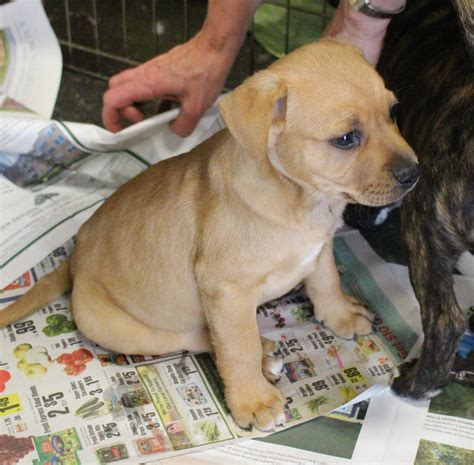 puppy parade at pet pantry in greenwich rescue puppies