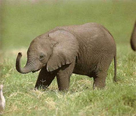 lovely cutie pies baby elephant 23