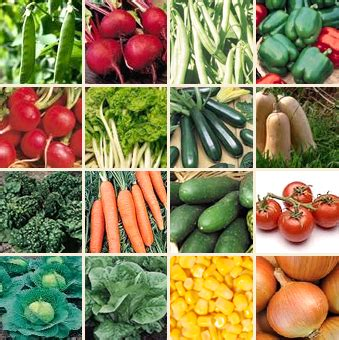 vegetable seed production in pakistan bolta karachi