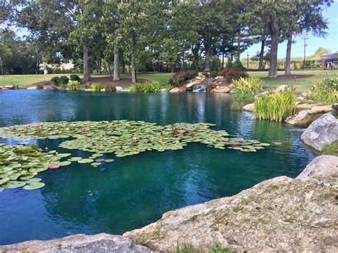 Pond Dye   Is It Worth the Money? / Platinum Ponds & Lake