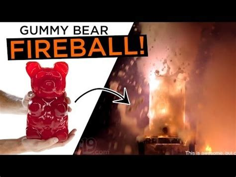Gummy Bear Meme - pitbull song fireball memes