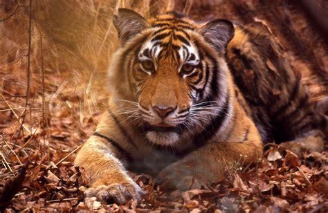 imagenes interesantes de animales animales curiosos de la india que solo existen en el
