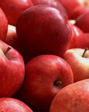 z y fruit company russia фрукты продукция z y fruit company